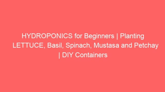 HYDROPONICS for Beginners | Planting LETTUCE, Basil, Spinach, Mustasa and Petchay | DIY Containers