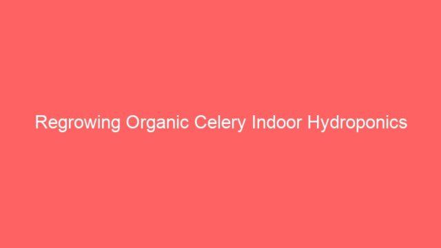 Regrowing Organic Celery Indoor Hydroponics