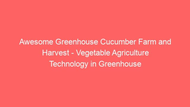 Awesome Greenhouse Cucumber Farm and Harvest – Vegetable Agriculture Technology in Greenhouse