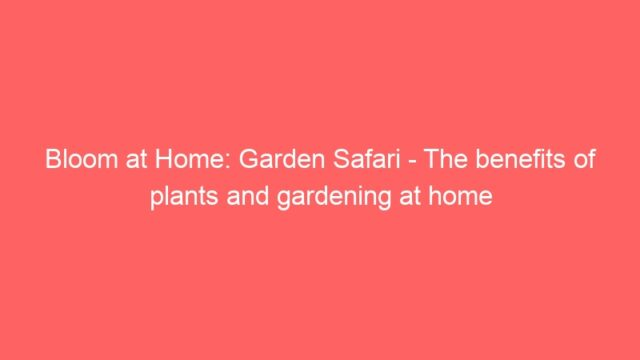 Bloom at Home: Garden Safari – The benefits of plants and gardening at home