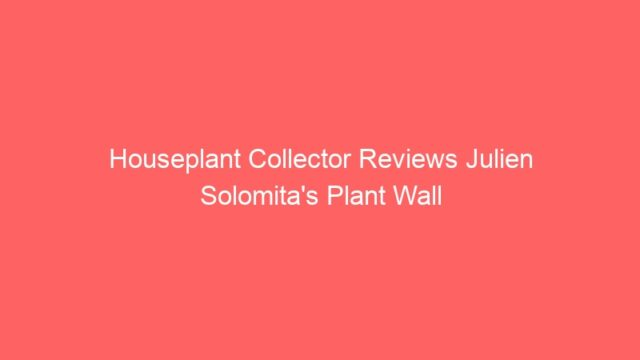Houseplant Collector Reviews Julien Solomita's Plant Wall