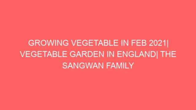 GROWING VEGETABLE IN FEB 2021  VEGETABLE GARDEN IN ENGLAND  THE SANGWAN FAMILY