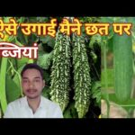 how to grow vegetables at home / vegetable gardening / terrace vegetable garden in hindi