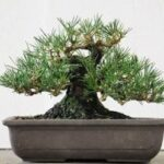I recommend magnolia and pine cuttings