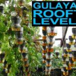 My Rooftop Garden [Level Up!]