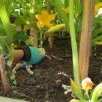 Grow squash and zucchini vertically!