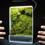 Mini Self-Watering Moss Wall