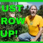 How to Grow a Vertical Garden