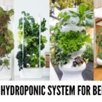What is the Best Hydroponics System for Beginners in 2020?
