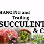 Hanging Succulents Identification + Cacti || Desert Succulent