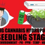 How To Grow Weed Hydroponically At Home 101 – The Seedling Stage