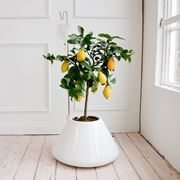 plants for the house