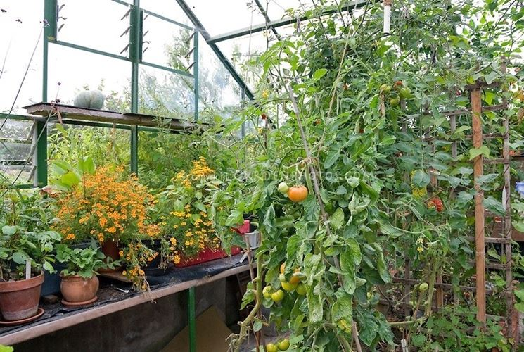 greenhouse for the vegetable garden