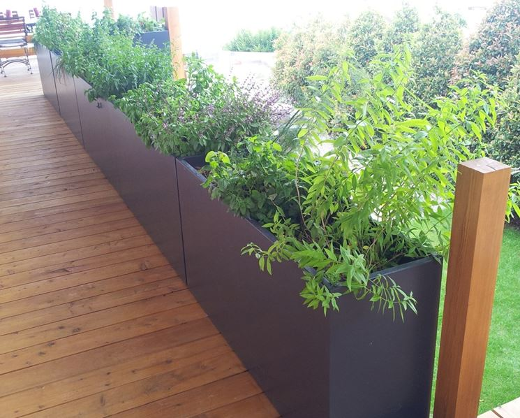 Aromatic plants in planters