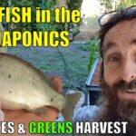 Aquaponics System | NEW FISH, Feed Rates & MORE 🐟🌱🌱