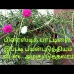 How to grow table rose plant in the at plastic bottle/verticle gardening