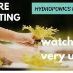 Hydroponics farming | Advantages and Disadvantages | watch this before starting | FIE Studio