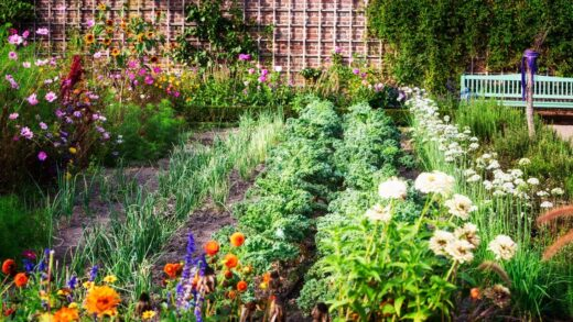 Planning a Vegetable Garden for Beginners: The 5 Golden Rules 🏆