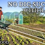 Productive NO DIG Vegetable Gardening in Raised Beds with Sides | Benefits, Tips and Suggestions