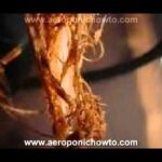 Aeroponic System Problems and Solutions