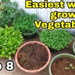 Easiest way to grow Top 8 Vegetables at Home/Garden | Small space gardening