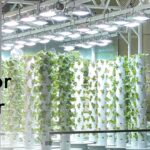 Indoor Aeroponic Tower Farm with Urban Smart Farms