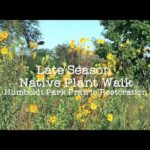 Late Summer Native Plant Walk, Midwest Natives Butterfly Sanctuary, Humboldt Park Chicago