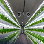 S. Korea's indoor farming technology helps crop production in the Middle East