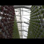 Vertical Greenhouse & R&D Hydroponic Farm | Eden Green Technology via RFD-TV