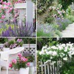 10 rose garden ideas