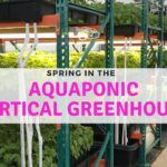 Back in the Greenhouse our Aquaponics Systems for Vertical Farming