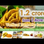 Earn 1.2 crores with Vertical Turmeric farming. Detailed and Accurate information.