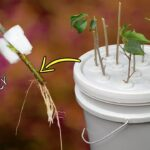 FASTEST METHOD OF ROOTING PLANT CUTTINGS | DIY HYDROPONIC CLONER