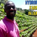FORMER JAMAICAN ATHLETE INSPIRING YOUNG FARMERS TO USE HYDROPONICS FARMING TECHNOLOGY IN JAMAICA