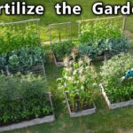 Garden FERTILIZER Routine How to FEED the VEGETABLE GARDEN for HUGE Yields of FRESH Organic FOOD