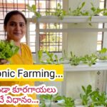 Get Hydroponic Farming setup at home || Kits and Nutrients available || Soil less farming #gardening