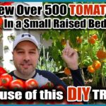 Grow Way More Tomatoes In Less Space! – Best Way to Trellis Tomatoes EVER!!!