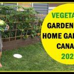 Home Vegetable Garden, Backyard Garden Idea, House Vegetables Garden, Modern Organic Gardening Ideas