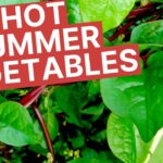 Summer Vegetables to Grow in your Florida Vegetable Garden | Beat the Heat in your Summer Garden