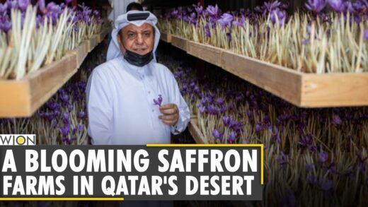 The Coronavirus pandemic this inspired 'Made in Qatar' saffron