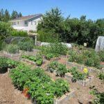 Vegetable Garden Tour #2 (June): Everyone Can Grow a Garden (2021) #27