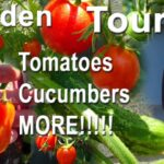 Vegetable Garden Tour Growing TOMATOES Cucumbers ZUCCHINI in Container Gardening Vertical Raised Bed