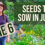 What to Plant in June- Zone 6 Vegetable Garden