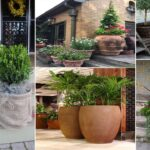 46 simple container gardening ideas for potted plants | DIY garden