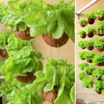 Amazing Hanging Vegetable Garden, Growing Vegetables in Dry Coconut Shell