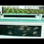 diy aquaponics | aquaponics systems | aquaponics fish