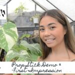 Grow Vertical | Propstick Demo & First Impression | Sam's Greenhouse