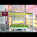 HYVE Indoor Farming Systems (Commercial Racking)