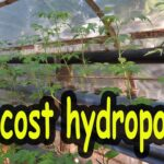 Low cost hydroponics system – Agriculture Technology