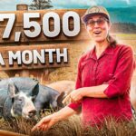 Starting a $188K/year Pig Farm Business (from Scratch)